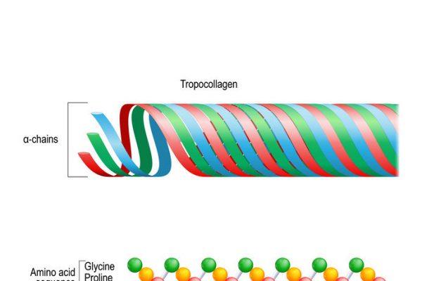 Bioaktivní kolagen