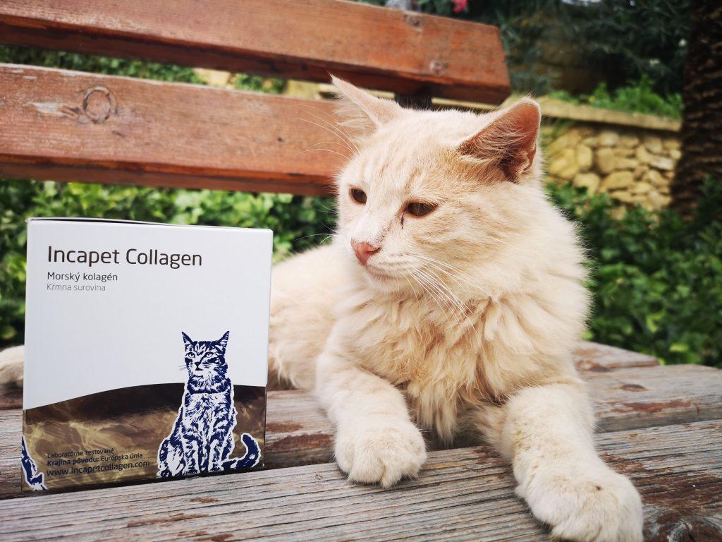 kolagen pro kocky
