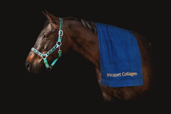 kolagen pro kone