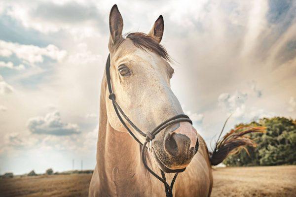 kolagen pro koně